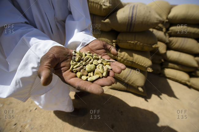 Field beans, called fuul, Sahara, Sudan