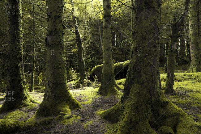 Forest, Scotland, England, United Kingdom, Europe