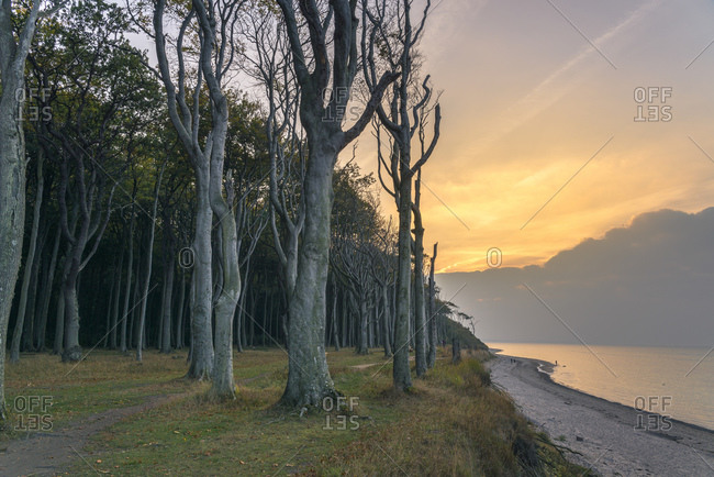 Ghost Forest, Nienhagen, Mecklenburg-West Pomerania, Germany