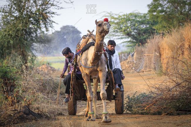 March 4, 2016: Ranthambhore, Rajasthan, India