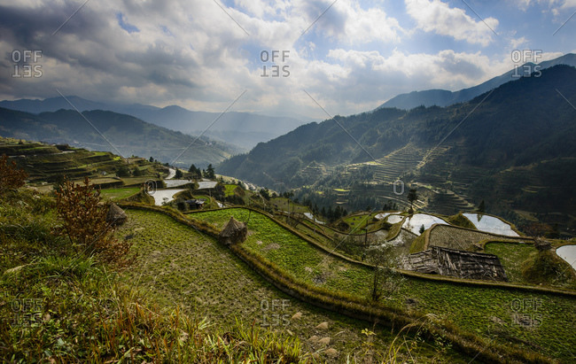 Rice terraces in Guizhou Province, China