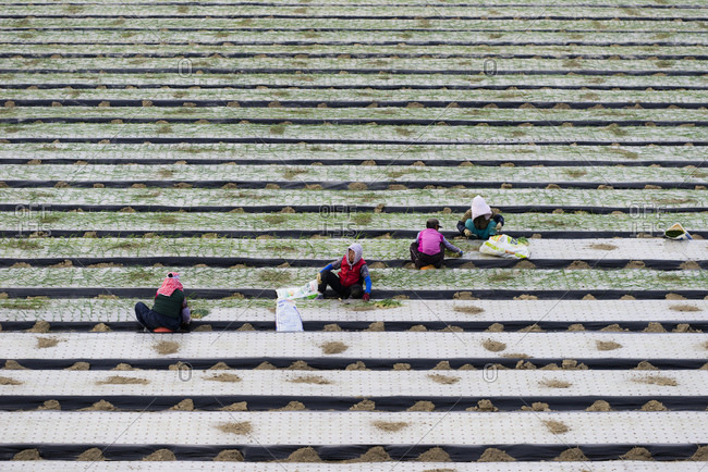 South Korean farmers near Busan, Korea