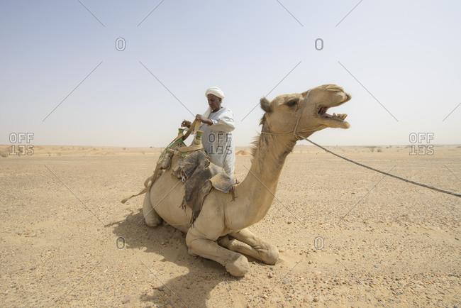 April 29, 2014: Sahara camel driver, Sudan