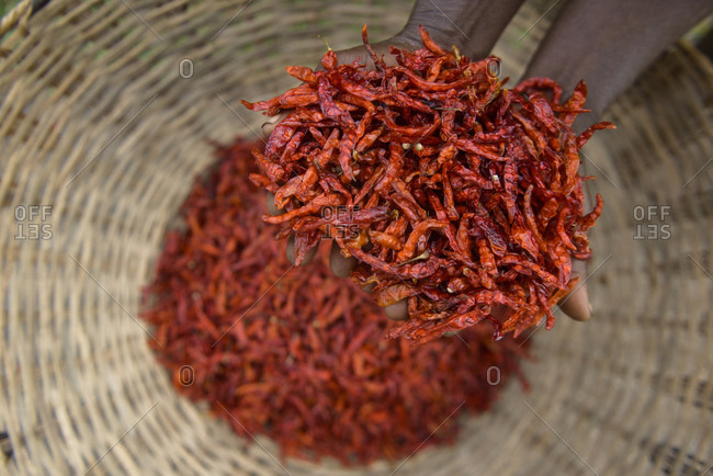 Drying and collecting red peppers, Nigerian countryside