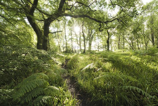 Mystic Forest, Scotland, England, United Kingdom, Europe