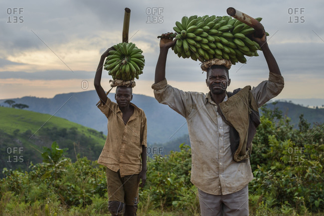 November 2, 2014: Banana picker, Burundi, Africa