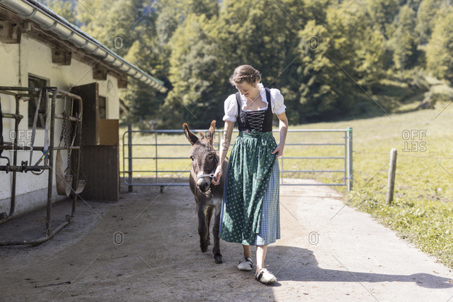 Farmer's wife with dirndl goes with a donkey