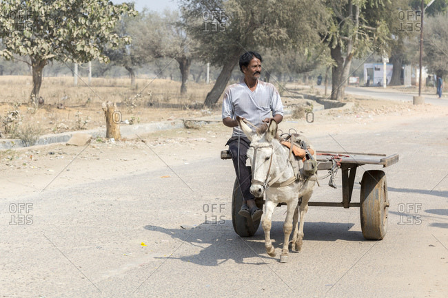 February 7, 2016: Street scene, Nawalgarh, Rajasthan, India