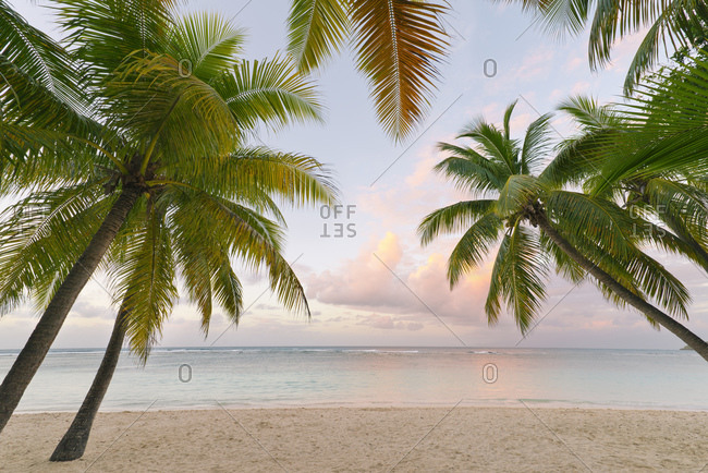Palm trees and beach, Guadeloupe, Caribbean, Central America