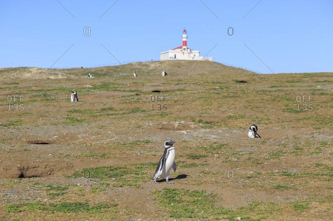 Monumento Natural Los Pinguinos, Isla Magdalena, Punta Arenas, Chile