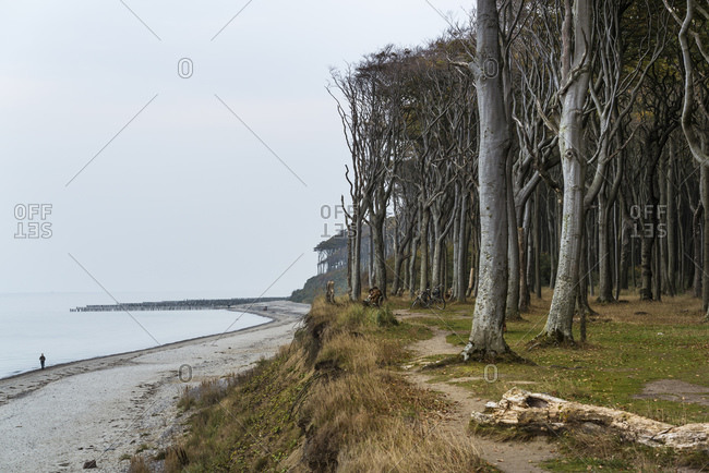 October 8, 2013: Ghost Forest, Nienhagen, Mecklenburg-West Pomerania, Germany