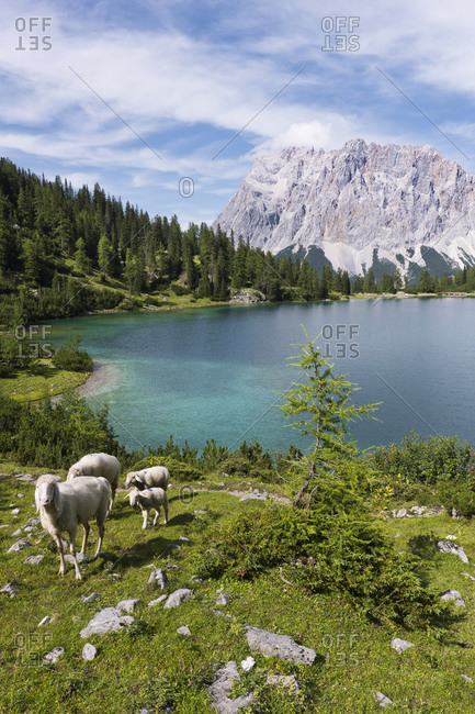 Seebensee with Zugspitze, Wetterstein Mountains, Alps, Tyrol, Austria, Europe