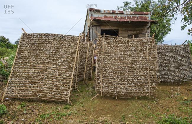 Silkworm farm, Bao Loc, Lam Dong Province, Vietnam, Asia