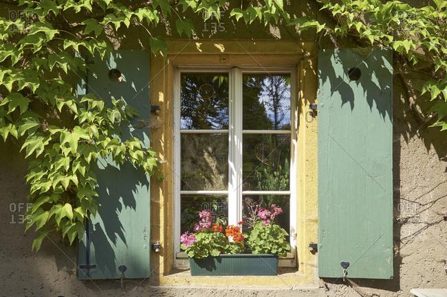 Window with vine leaves in Altkotzschenbroda, Radebeul, Saxony, Germany