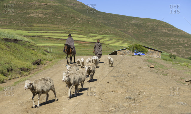February 13, 2015: Shepherds in Kwazulu Natal Province, South Africa
