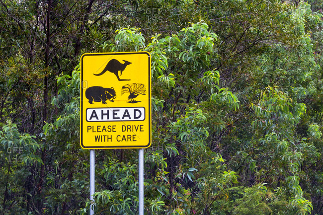Street sign with kangaroo, wombat and various bird species, Australia