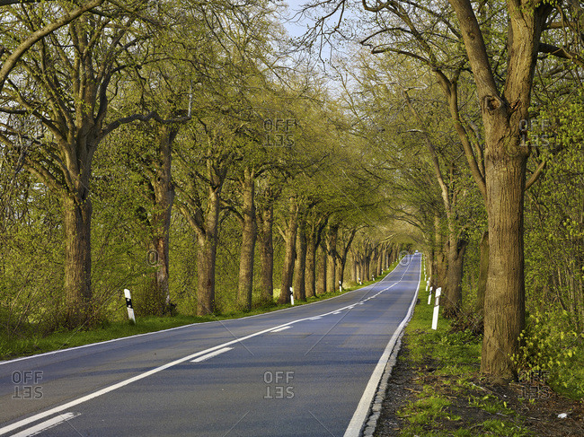 Alleyway near Putbus on the island of Rugen, Mecklenburg-Western Pomerania, Germany