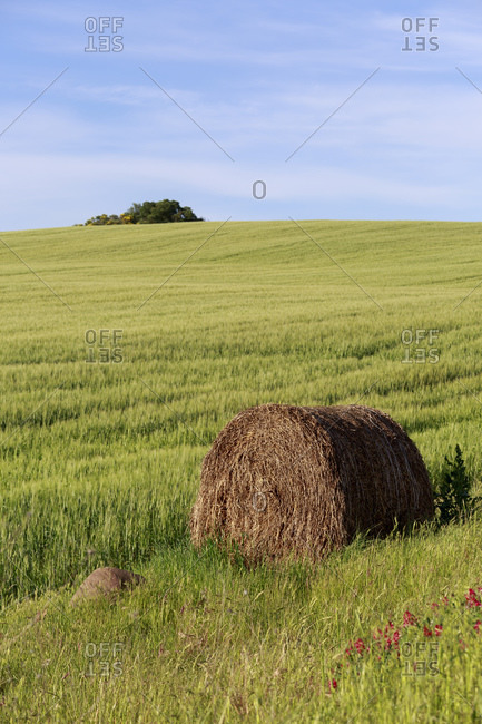 May 12, 2014: The landscape of the Val d'Orcia, Tuscany, Italy