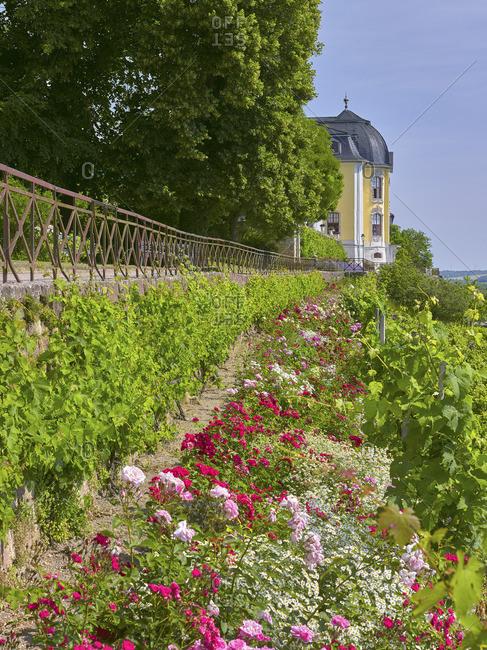 Terrace with rococo castle of Dornburger castles, Dornburg, Saale-Holzland-Kreis, Thuringia, Germany
