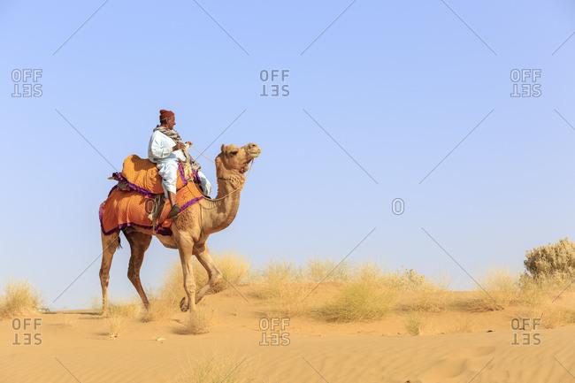 February 10, 2016: Camel Safari, Dromedaries, Camel Guide, Thar Desert, Rajasthan, India