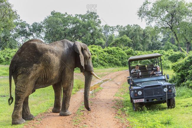 February 9, 2015: Elephant (Loxodonta africana), South Luangwa National Park, Zambia, Africa