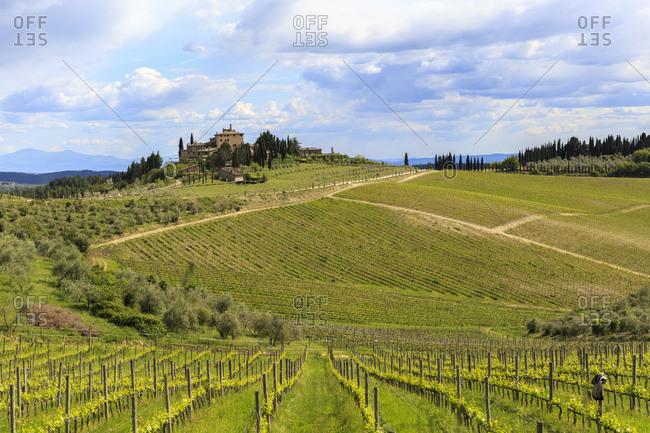Gaiole in Chinati is located in the Chianti Classico area, Tuscany, Italy