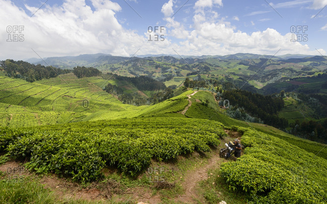 October 26, 2014: Cycling through the tea plantations of western Rwanda, Africa