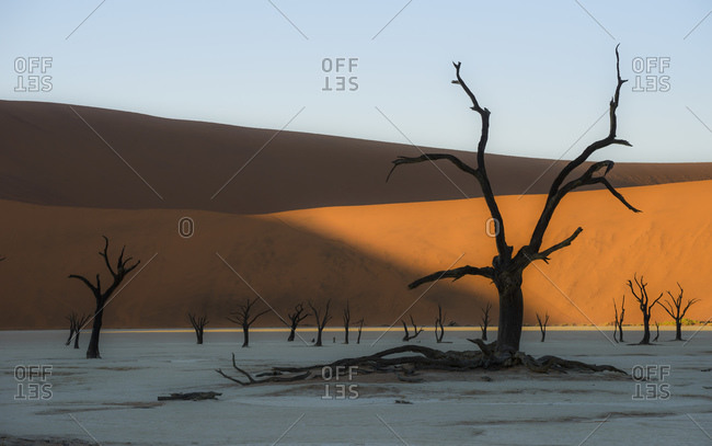 The red dunes of Sossusvlei and the dead trees of Deadvlei, Namibia