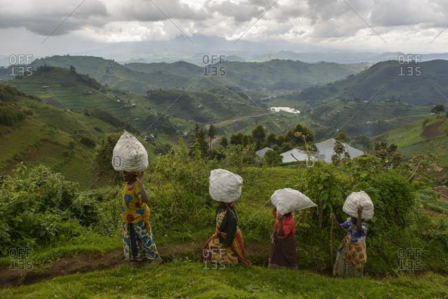 October 22, 2014: Women carry potato sacks, Virunga region near Kisoro, Uganda, Africa
