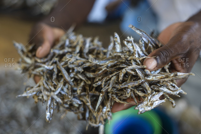 November 21, 2014: Man holds fish at fish market on Lake Malawi, Malawi, Africa