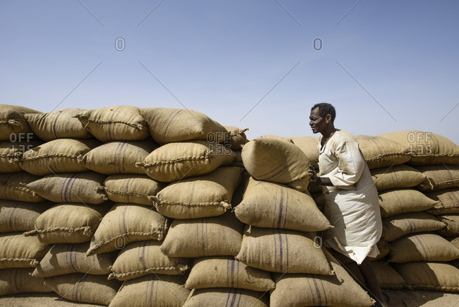 April 22, 2014: Sudanese unloads a truck full of sacks of field beans in the Sahara, Sudan