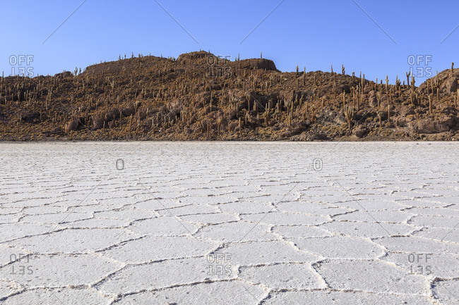 Isla Incahuasi in the Salar de Uyuni, largest salt pan of the earth, Altiplano, Bolivia, South America