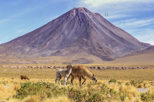 Licancabur (Mountain of the People), a 5,920 m high inactive volcano on the border between Bolivia and Chile, Atacama Desert, South America