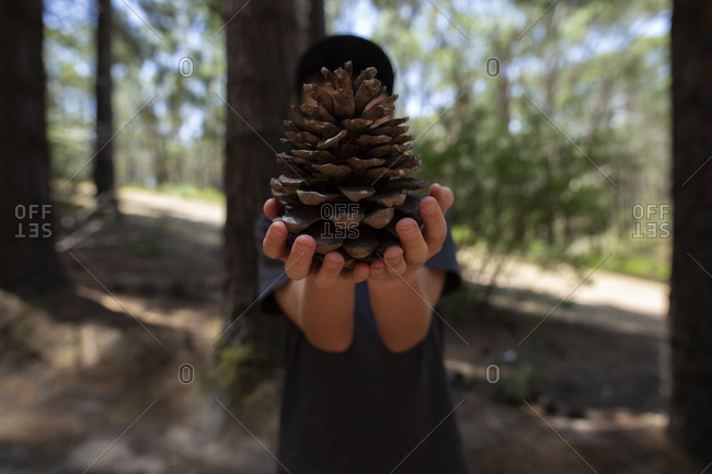 Child holding a large pinecone in front of his face