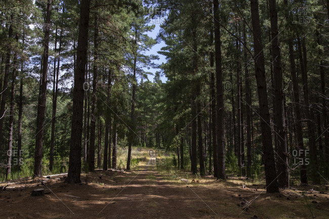 Dirt trail leading through forest