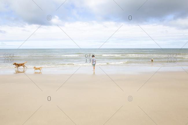 Boy watching dogs run on the ocean shore