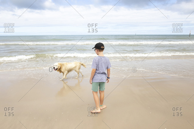 Young boy watching a dog play in the ocean waves