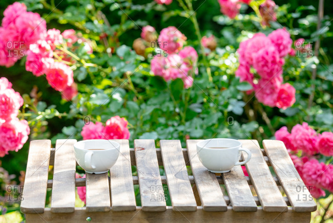 Two cups of coffee on wooden table in a garden with roses in the background