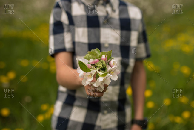 Boy in gingham pattern shirt holds apple blossoms in his hand