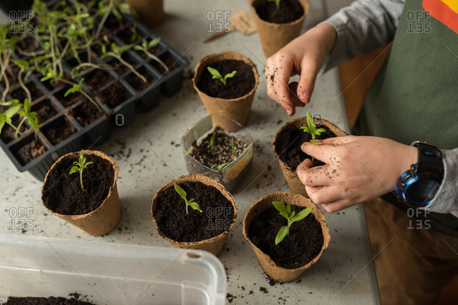 Child transplants seedlings into pots