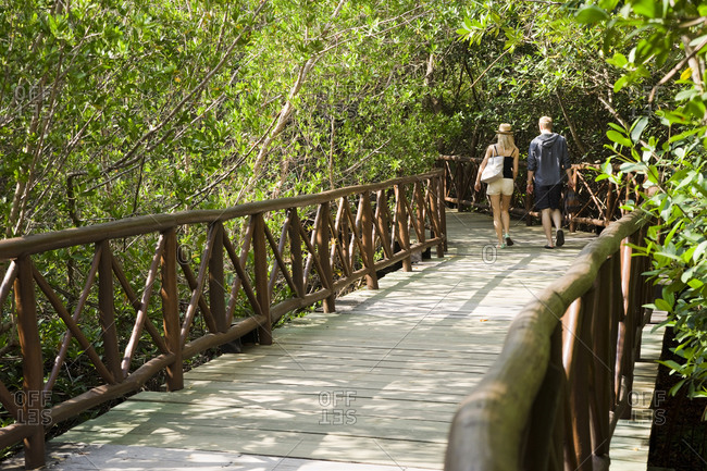 Couple walking along boardwalk in mangrove forest, Tulum, Quintana Roo, Mexico