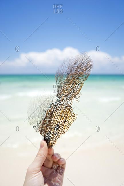 Hand holding coral on beach, Tulum, Quintana Roo, Mexico