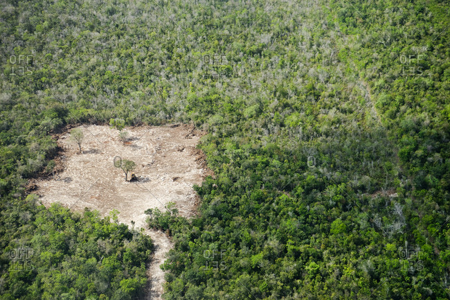 Aerial view of forest with cleared area, Cancun, Quintana Roo, Mexico