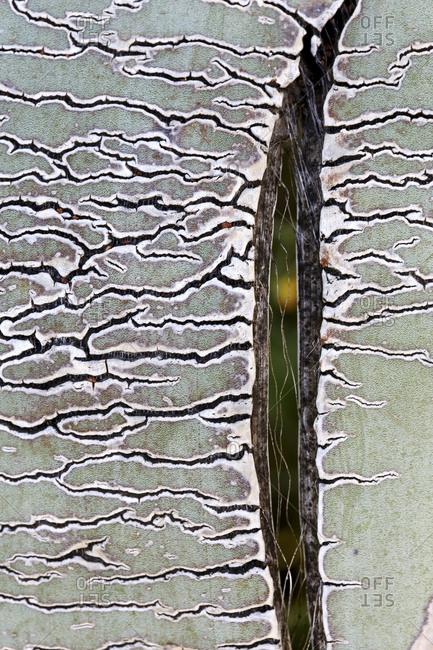 Extreme close-up of Agave americana plant, Cabo de Gate, Almeria, Spain