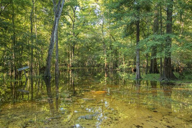 Johnson Springs after Santa Fe River flood, Florida, USA