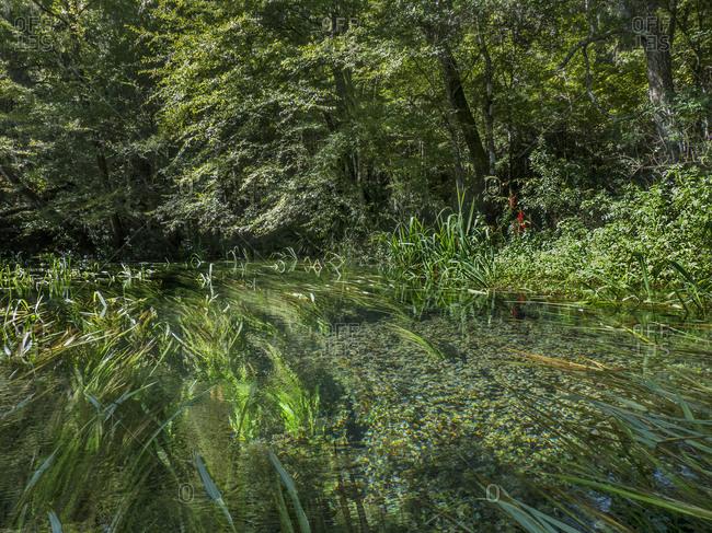 Green riverbank vegetation, Florida, USA