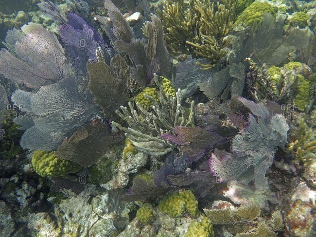 Coral reef, Grecian Rocks, Key Largo, Florida Keys, Florida, USA