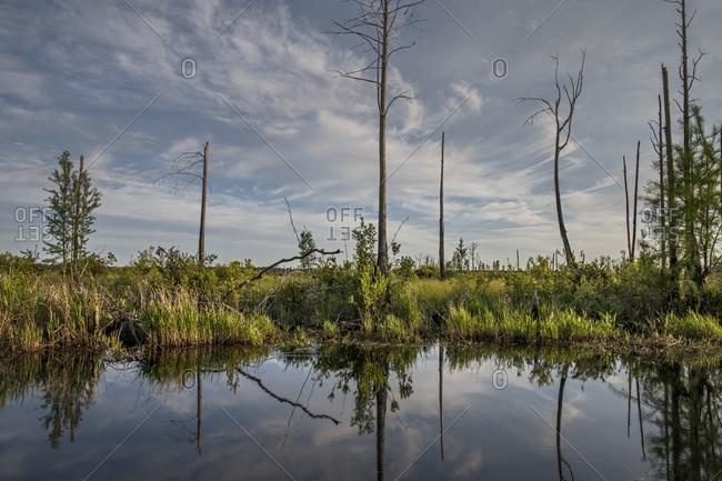 Okefenokee Swamp, Georgia, USA - Offset