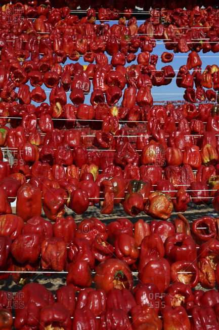 Chili peppers drying on rack, Gaziantep, Southeastern Anatolia, Turkey