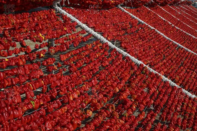 Chili peppers drying on rack, Gaziantep, Southeastern Anatolia, Turkey